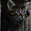 Проходы для кошек в подвалы домов будут сохранять - лого